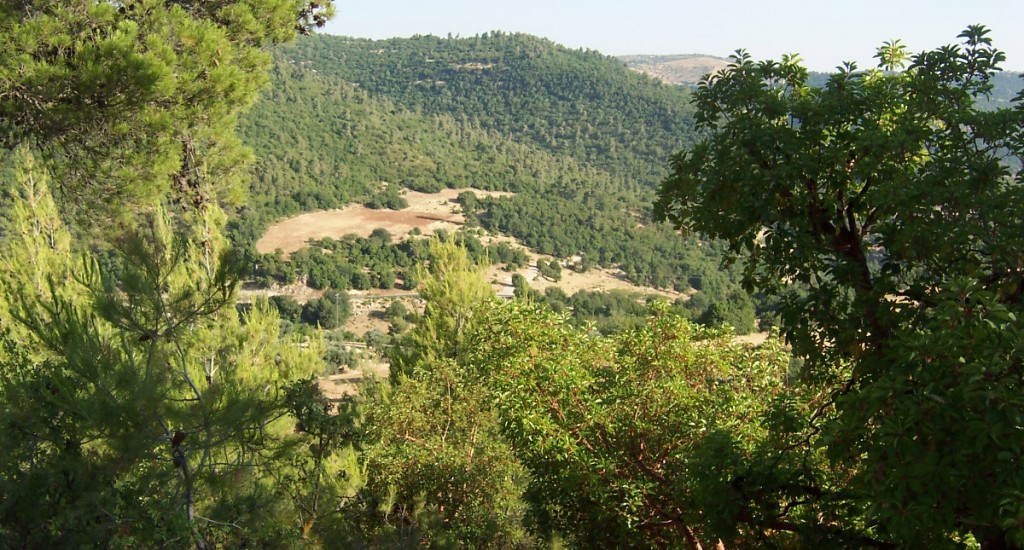 Ajloun_Forest_Reserve_Wiki