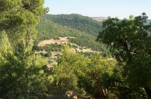 Ajloun_Forest_Reserve_Wiki